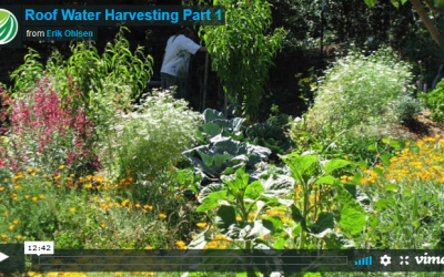 Roof Water Harvesting:  Part 1