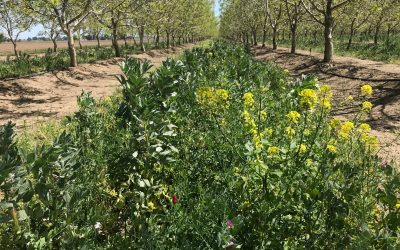 Pandemic Resilience Garden: Cover Crops, Sheet Mulching, & Bed Prep